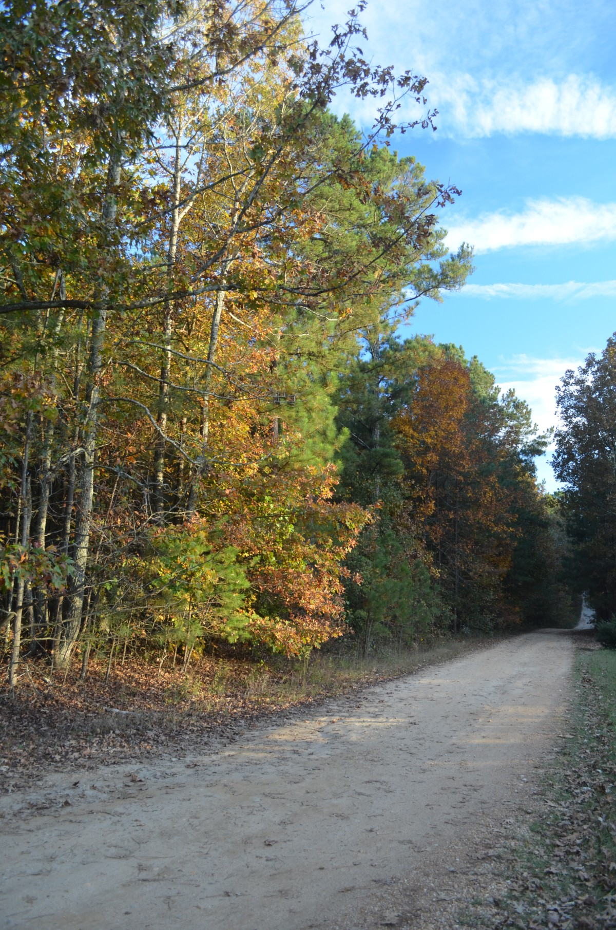 Country Lane in the Fall.