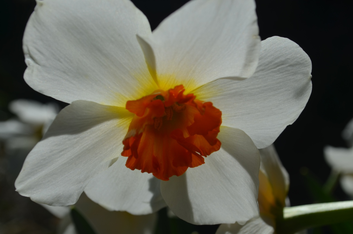 Spring Flowers #MondayBlogs