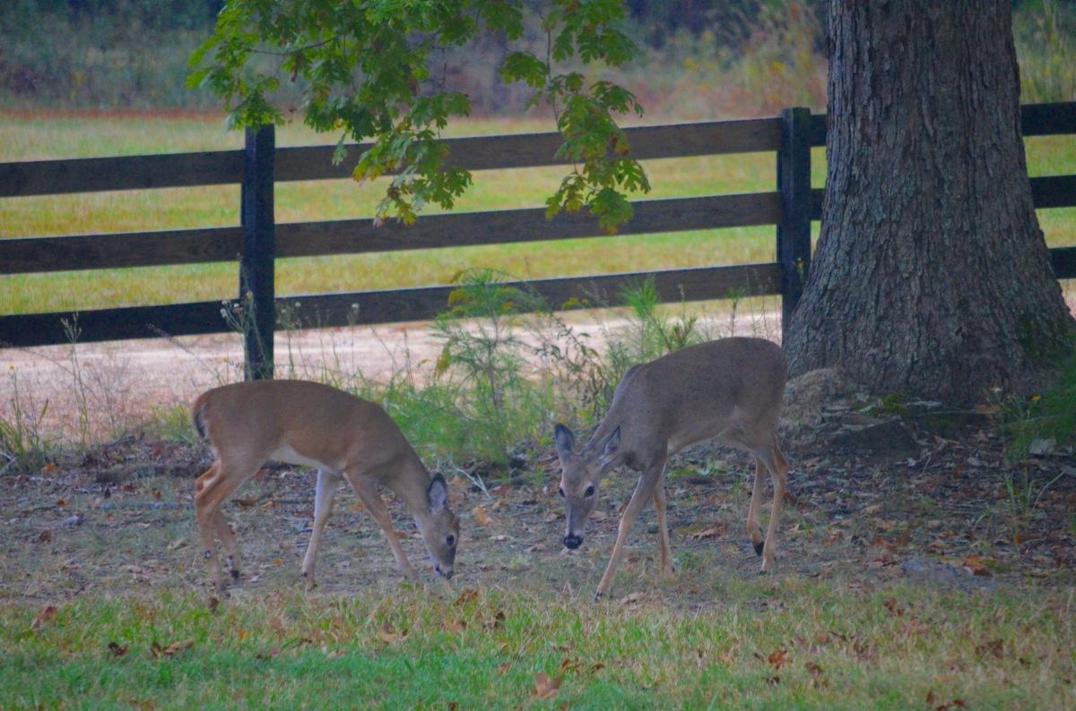 two_deer